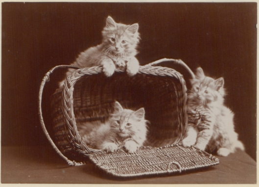 It could be a basket of kittens, Virgo. Ernest J. Rowley 'The Globe Kittens' 1902 {{PD}}