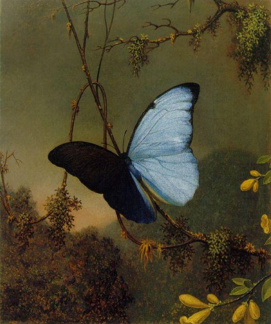 Martin Johnson Heade -'Blue Morpho Butterfly' c1865 {{PD}}