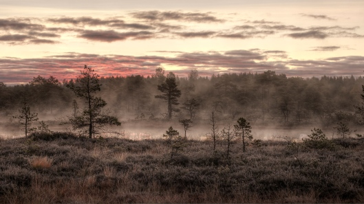 'Mukri bog in the October morning mist' by Amadvr http://commons.wikimedia.org/wiki/User:Amadvr Creative Commons Attribution-ShareAlike 3.0 Estonia