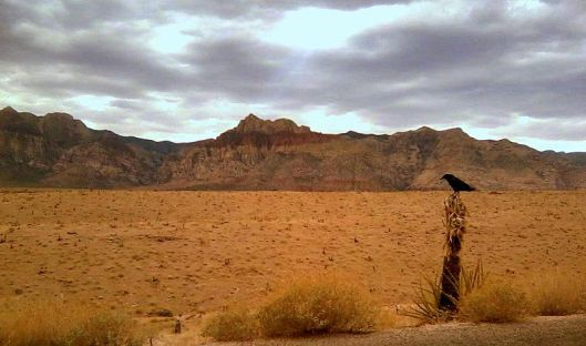 'Black bird near Red Rock Canyon, Las Vegas' Photo by Barbara Whitney, Creative Commons Attribution-Share Alike 4.0 International
