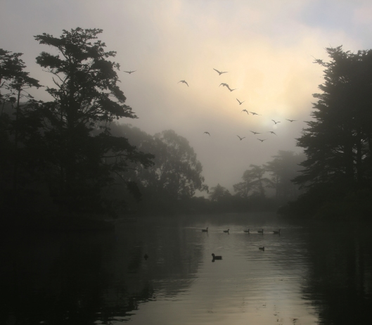 'Canada Geese and morning fog in Golden Gate Park' Brocken Inaglory  Creative Commons Attribution-Share Alike 3.0 Unported