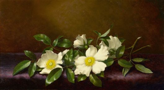 'Cherokee Roses on a Purple Cloth' Martin Johnson Heade 1894 {{PD}}