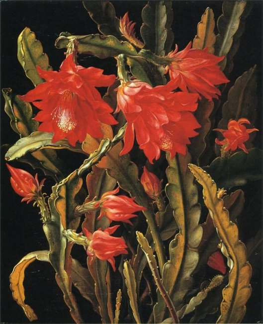 By Christian Juel Mollback 'Cactus with Scarlet Blossoms', Irina, 2014-05-10 22:35, CC BY 2.0, https://commons.wikimedia.org/w/index.php?curid=38413341