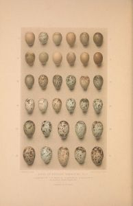 Eggs of the British warblers. {{PD}}